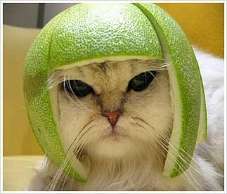Internet Marketing Cat