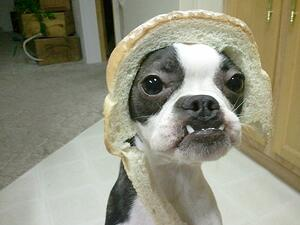 internet marketing in-bread-dog