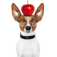 dog_apple_stock_picture